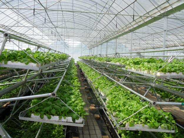 河南温室大棚育苗工厂