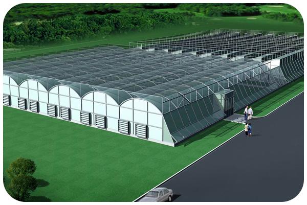 专业的技术打造过硬的温室大棚