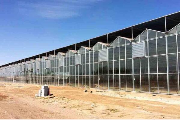 新手管理溫室大棚蔬菜田無從下手?河南玻璃溫室廠家告訴您專業的操作方法