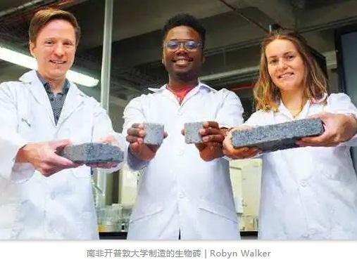 南非开普敦大学制造的生物砖