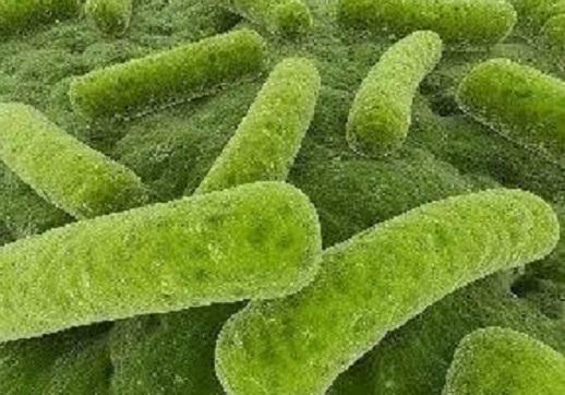 泽源净水-硝化细菌