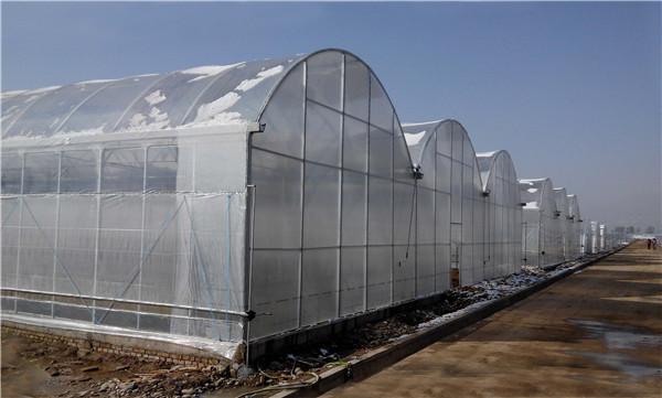 甘肃省甘谷县现代农业示范园