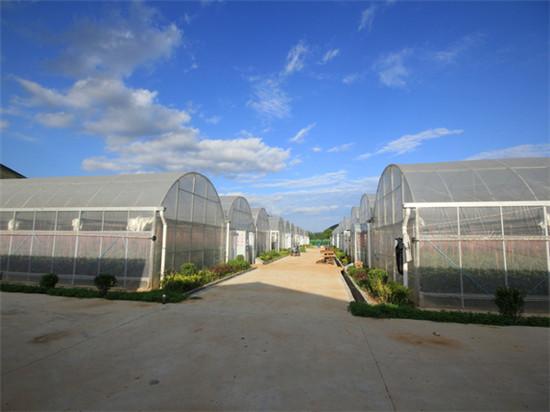 2013年建成的洛南烟草公司烟叶育苗基地