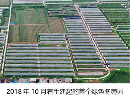 绿色冬枣园建成