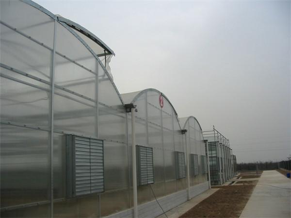 拱顶式智能联栋温室