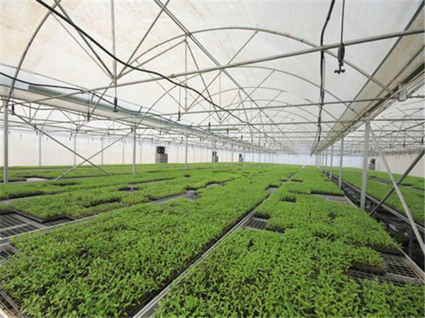 温室大棚的温度应该如何控制呢?