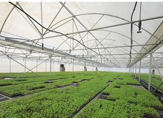 为什么现代农业的都做温室大棚?陕西温室大棚好在哪里