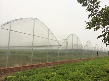 小编带你了解各类别的陕西温室大棚造价优缺点对比