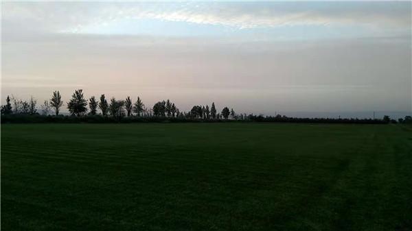 绿之茵混播草坪
