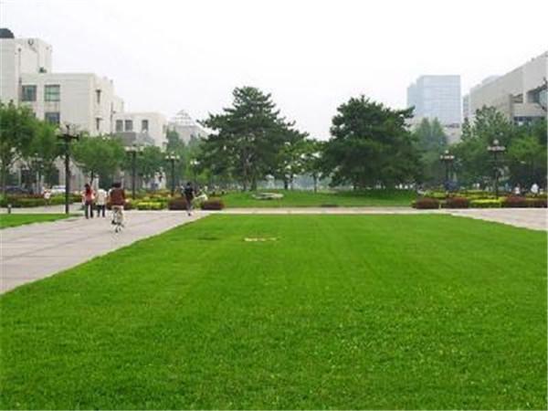 学校绿化使用我们的混播草坪