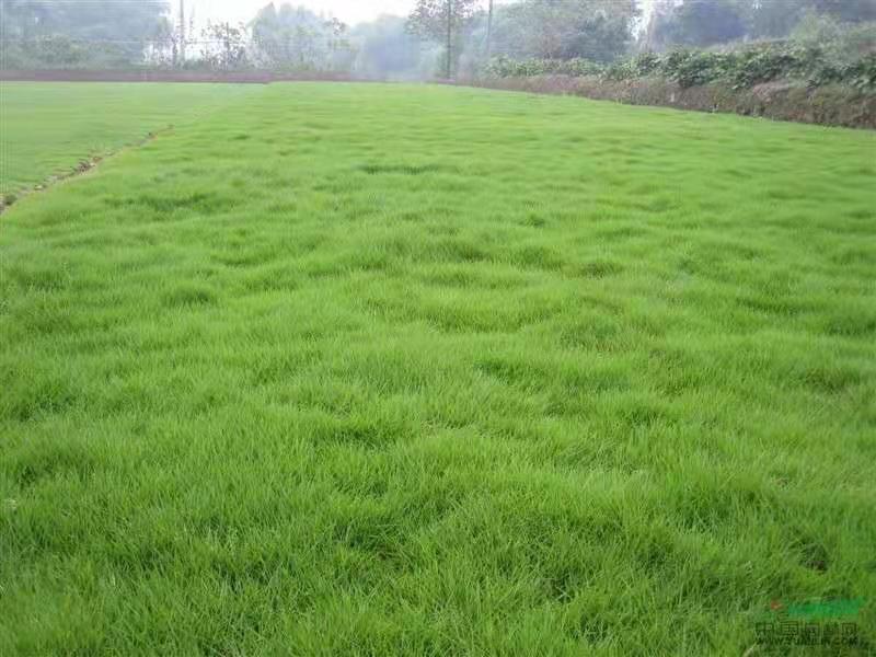 优势草坪识别