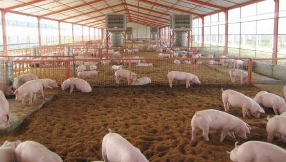 大家知道四川生物发酵床的7大优点吗?