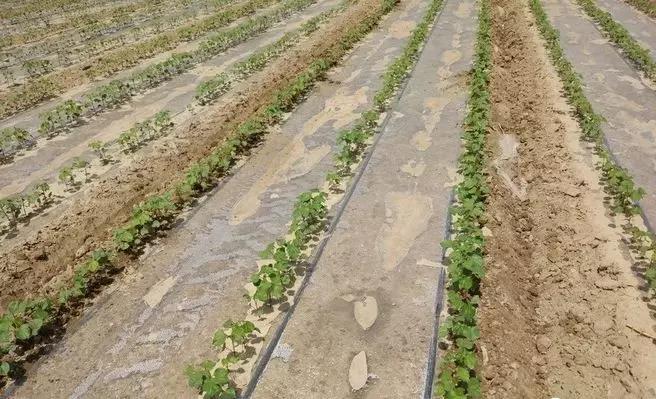 农业知识:购买鄂尔多斯地膜要注意什么?