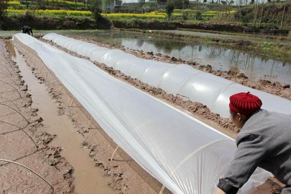 使用鄂尔多斯地膜的农民对地膜的评价