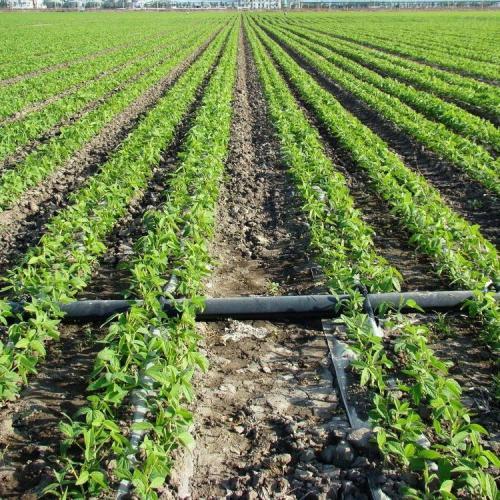温室大棚使用滴灌带好还是微喷带好呢?
