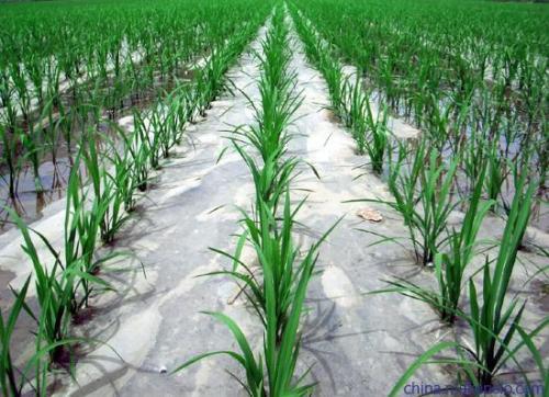 农业地膜的应用