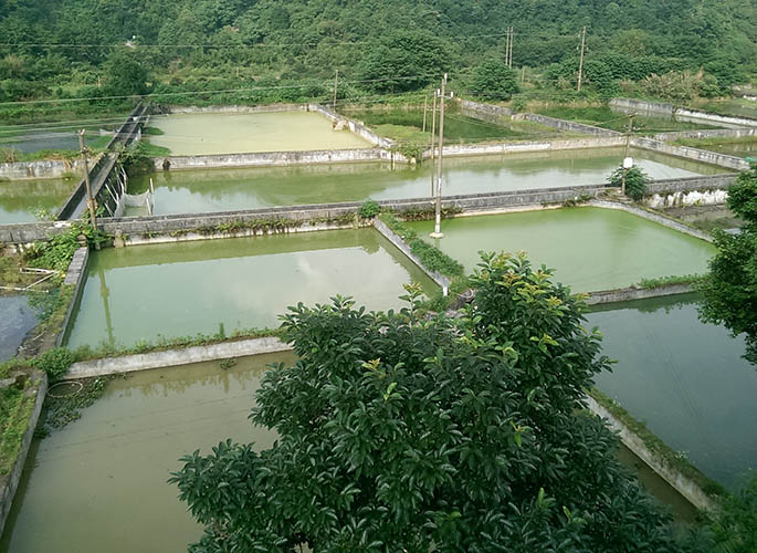 四川泥鳅养殖
