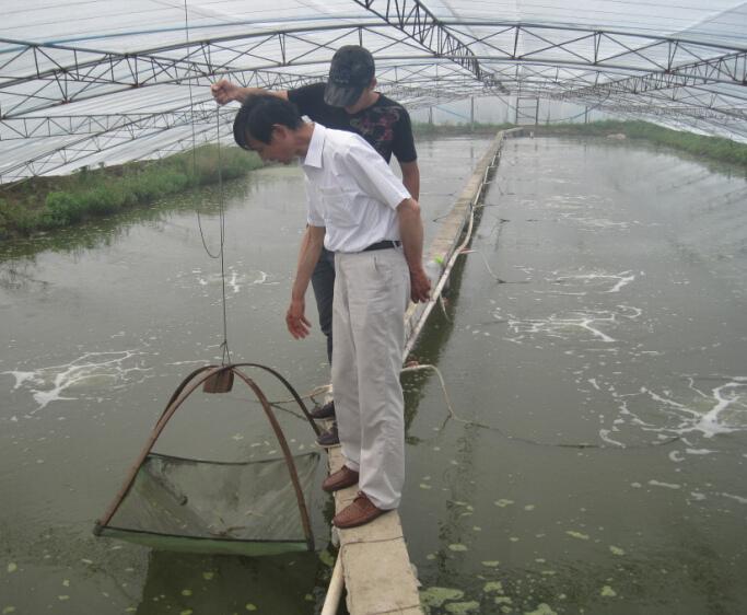 四川美蛙-大棚养殖展示