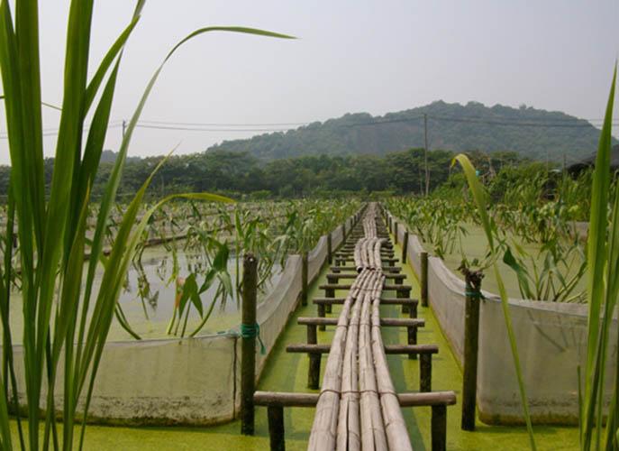 成都水蛭养殖