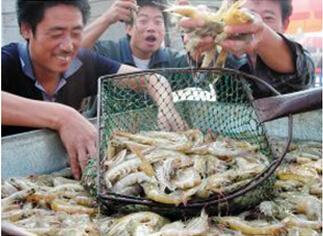 养鱼老手改养虾利润翻七倍