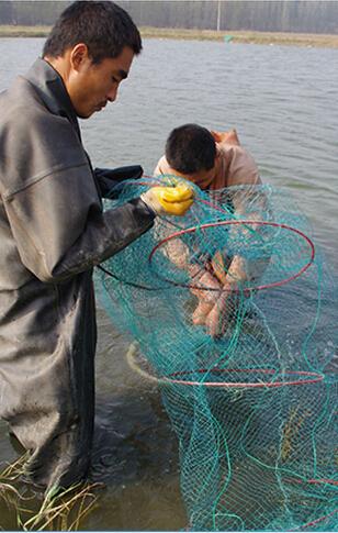 四川虾养殖-水产养殖
