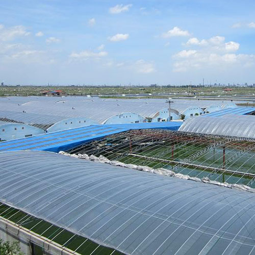 四川淡水虾养殖