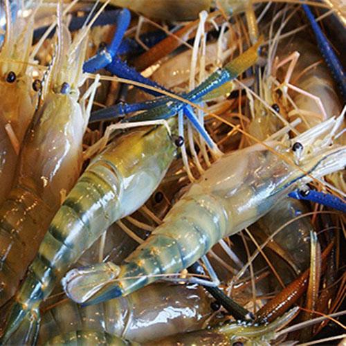 六种淡水小龙虾养殖方式你可知道吗