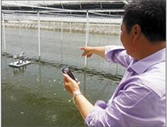 四川泥鳅养殖客户