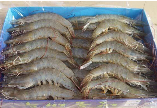 成都虾养殖厂家