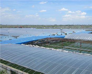 湖南虾养殖公司
