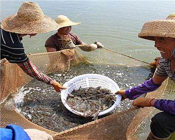 湖南虾养殖