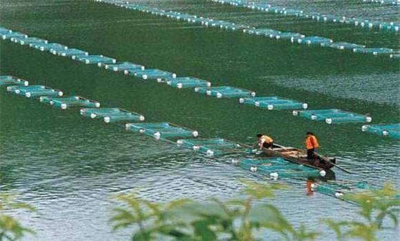 四川虾养殖商家为您讲解淡水虾养殖需要注意哪些?
