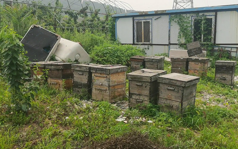 蜂蜜养殖基地