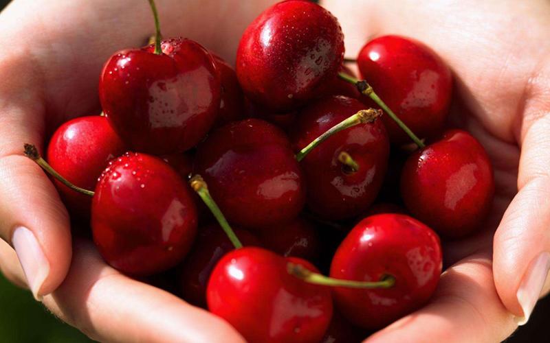 红灯大连大樱桃