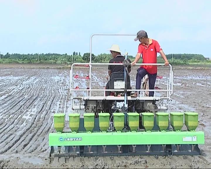 机械加持,水稻播种更高效!现代化农业