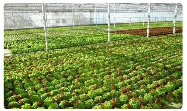 如今的農業機械化厲害到什么程度?