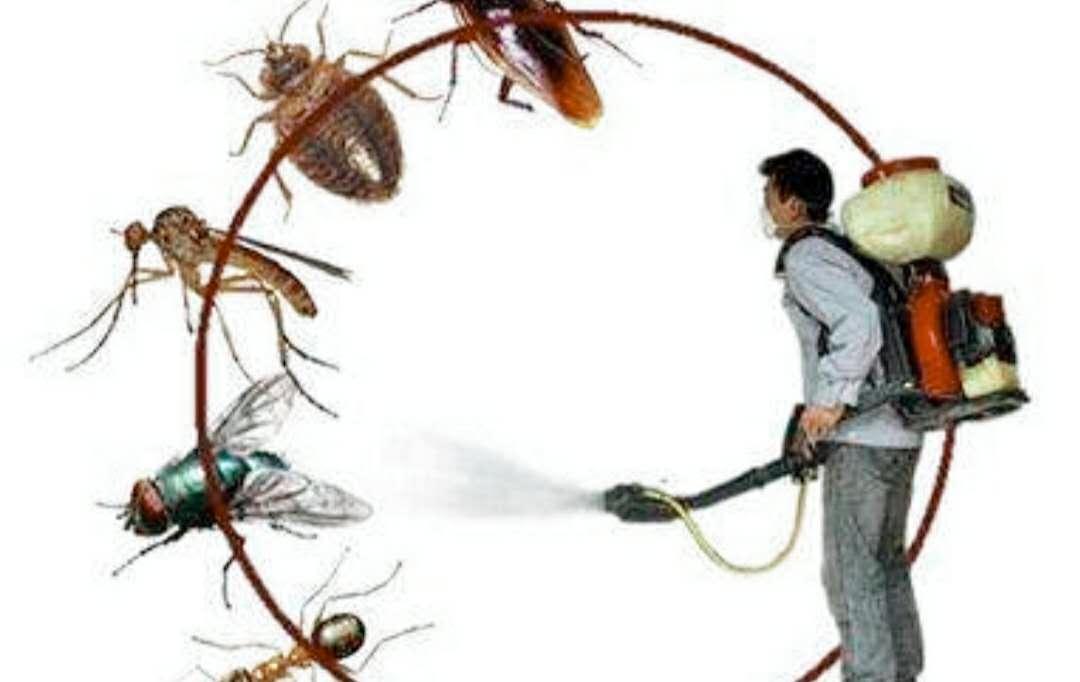 虽有打不死的小强,但却没有灭不掉的蟑螂。灭老鼠、灭蟑螂我们是认真的??