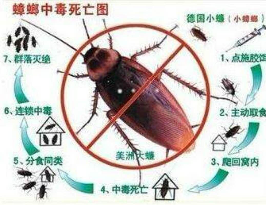 蟑螂危害性图片