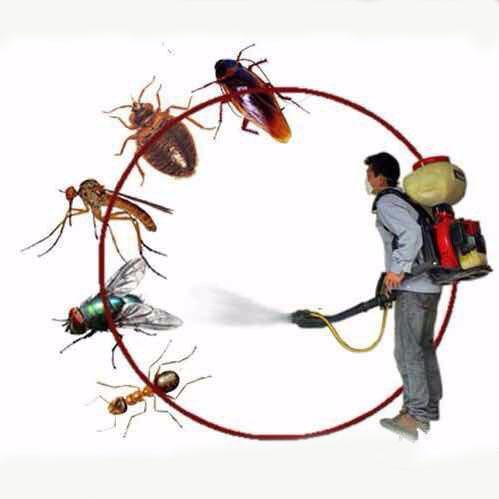 灭蟑螂服务