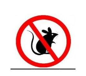 灭老鼠.有效的方法——灭鼠公司