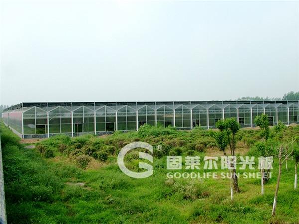 淮北红庄示范园