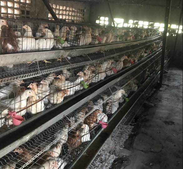 云南鸡笼生产