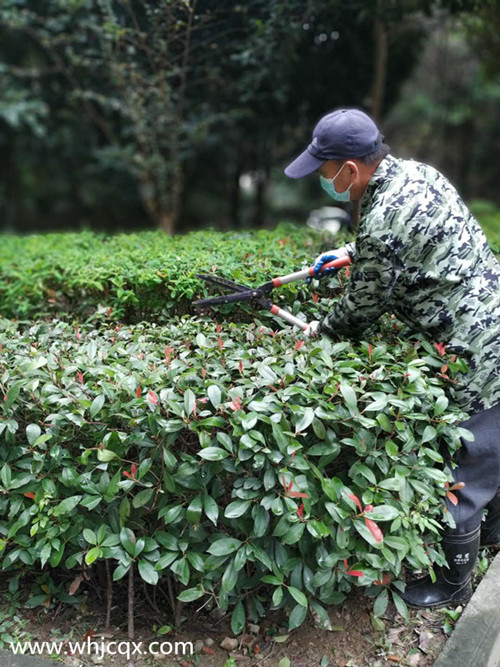 绿化养护中的注意事项