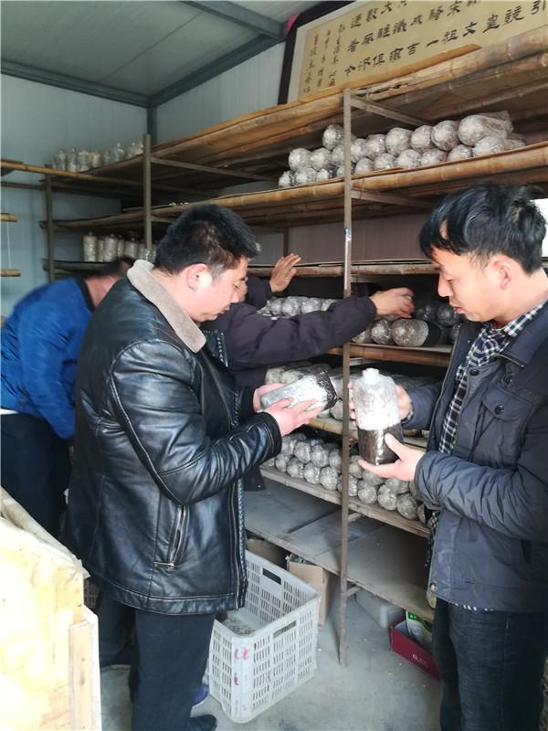 河南食用菌种植技术培训