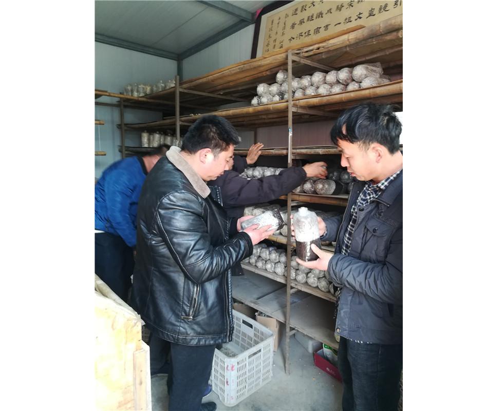河南食用菌种植技术培训教学课程