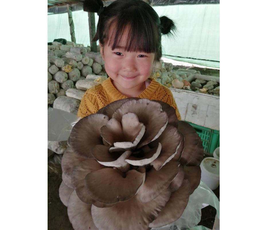 食用菌是怎样进行科学的栽培呢?卫东蘑菇是这样做的