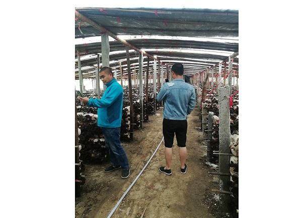 河南食用菌种植技术培训成功案例