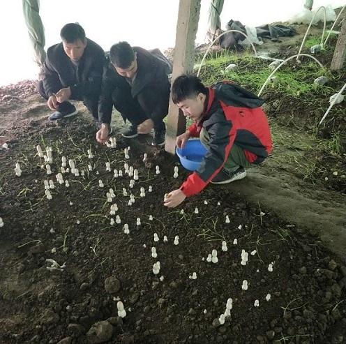 河南鸡腿菇种植培训