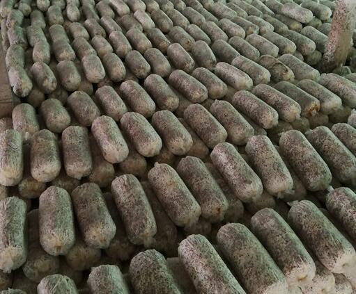 河南香菇种植培训基地电话