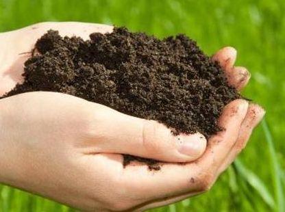 科普知识:土壤修复的方法有哪些?